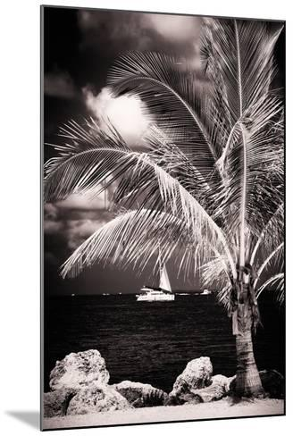 Paradise Palm Tree with a Sailboat on the Ocean - Florida-Philippe Hugonnard-Mounted Photographic Print