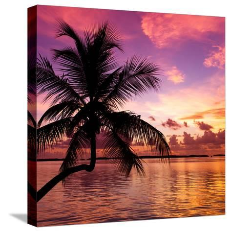 Silhouette of Palm Tree at Sunset-Philippe Hugonnard-Stretched Canvas Print