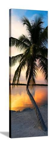 Palm Tree at Sunset - Florida-Philippe Hugonnard-Stretched Canvas Print