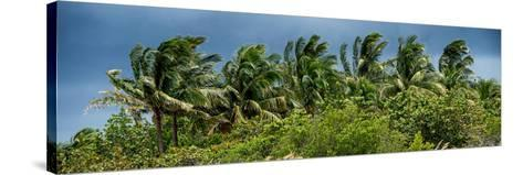 View a Forest of Palm Trees Trees during a Tropical Storm - Miami - Florida-Philippe Hugonnard-Stretched Canvas Print