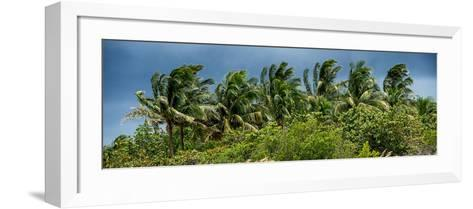 View a Forest of Palm Trees Trees during a Tropical Storm - Miami - Florida-Philippe Hugonnard-Framed Art Print