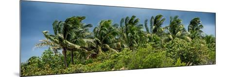 View a Forest of Palm Trees Trees during a Tropical Storm - Miami - Florida-Philippe Hugonnard-Mounted Photographic Print