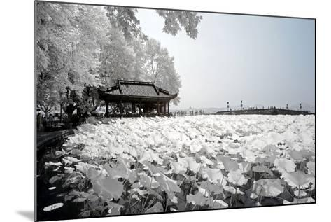 China 10MKm2 Collection - Another Look - Lotus Lake-Philippe Hugonnard-Mounted Photographic Print