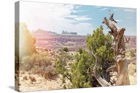 Pastel Series - American West-Philippe Hugonnard-Stretched Canvas Print