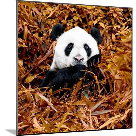 China 10MKm2 Collection - Giant Panda-Philippe Hugonnard-Mounted Photographic Print