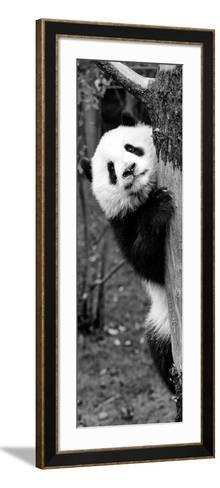 China 10MKm2 Collection - Giant Panda Baby-Philippe Hugonnard-Framed Art Print