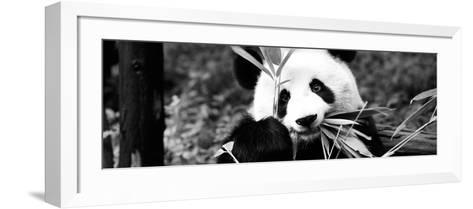 China 10MKm2 Collection - Giant Panda-Philippe Hugonnard-Framed Art Print
