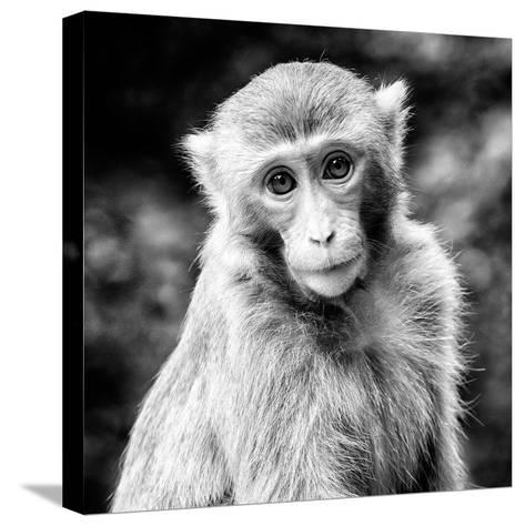 China 10MKm2 Collection - Monkey Portrait-Philippe Hugonnard-Stretched Canvas Print