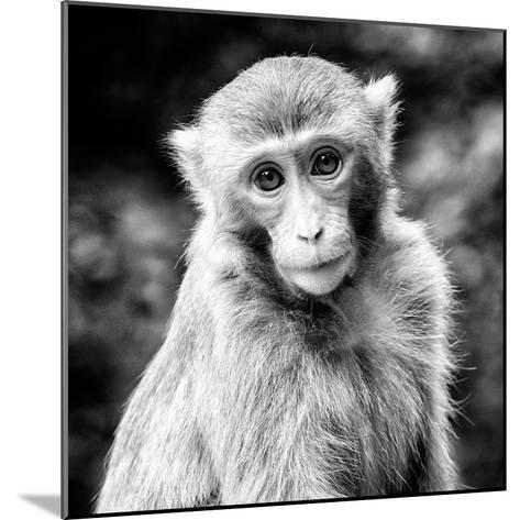 China 10MKm2 Collection - Monkey Portrait-Philippe Hugonnard-Mounted Photographic Print