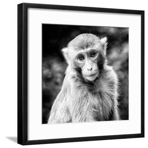 China 10MKm2 Collection - Monkey Portrait-Philippe Hugonnard-Framed Art Print