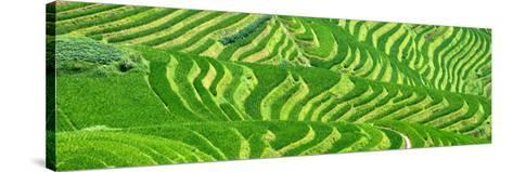 China 10MKm2 Collection - Rice Terraces - Longsheng Ping'an - Guangxi-Philippe Hugonnard-Stretched Canvas Print