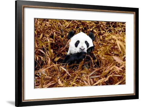 China 10MKm2 Collection - Giant Panda-Philippe Hugonnard-Framed Art Print