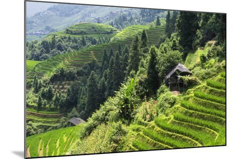 China 10MKm2 Collection - Rice Terraces - Longsheng Ping'an - Guangxi-Philippe Hugonnard-Mounted Photographic Print