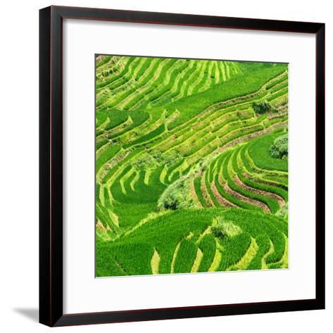 China 10MKm2 Collection - Rice Terraces - Longsheng Ping'an - Guangxi-Philippe Hugonnard-Framed Art Print