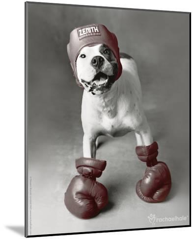 Boxing Dog-Rachael Hale-Mounted Photo