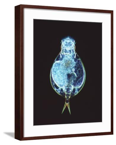 Rotifer Worm, Light Micrograph-Laguna Design-Framed Art Print
