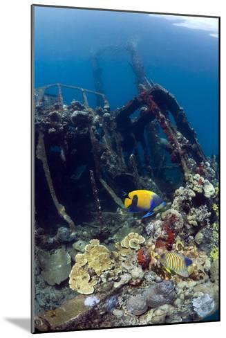 Kasi Maru Shipwreck And Fish-Georgette Douwma-Mounted Photographic Print