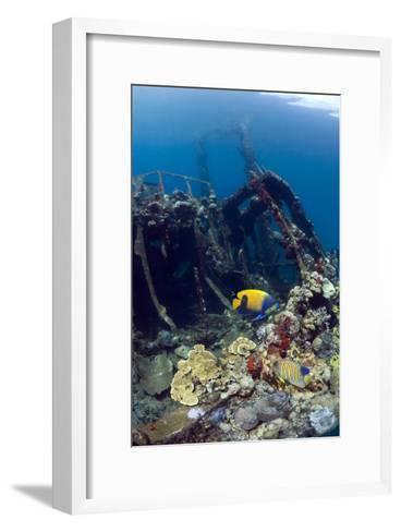 Kasi Maru Shipwreck And Fish-Georgette Douwma-Framed Art Print
