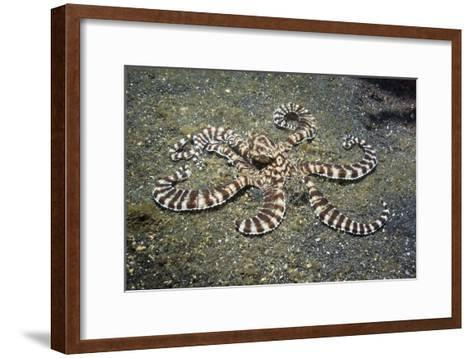 Mimic Octopus-Georgette Douwma-Framed Art Print