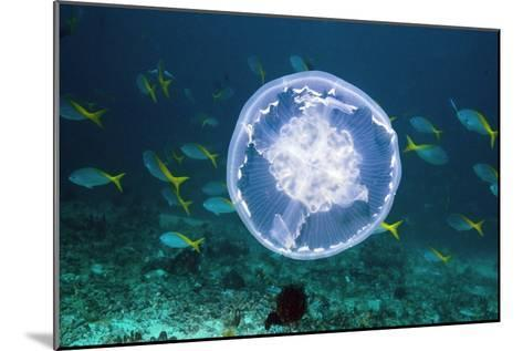 Fish And Jellyfish Over a Coral Reef-Georgette Douwma-Mounted Photographic Print