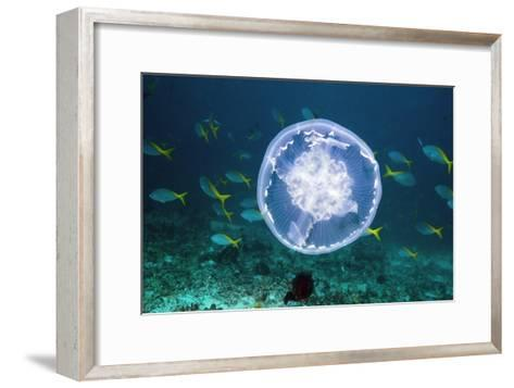 Fish And Jellyfish Over a Coral Reef-Georgette Douwma-Framed Art Print