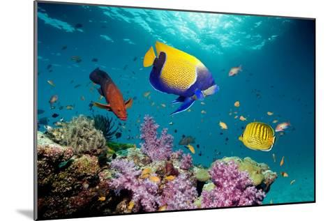 Tropical Reef Fish-Georgette Douwma-Mounted Photographic Print