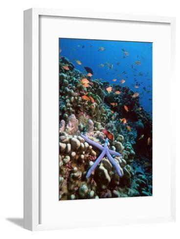 Blue Linckia Starfish-Georgette Douwma-Framed Art Print