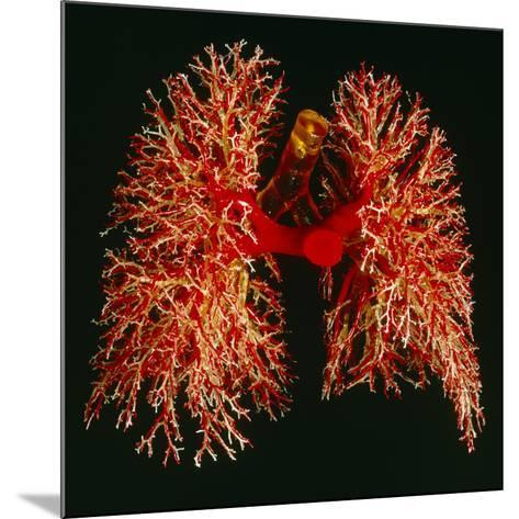 Resin Cast of Pulmonary Arteries And Bronchi-Martin Dohrn-Mounted Photographic Print