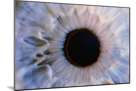 Eye-Martin Dohrn-Mounted Photographic Print