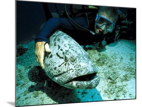 Potato Cod with Diver-Georgette Douwma-Mounted Photographic Print