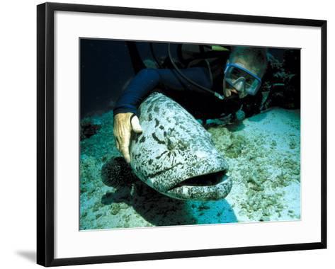 Potato Cod with Diver-Georgette Douwma-Framed Art Print