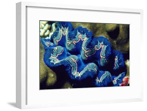 Giant Clam-Georgette Douwma-Framed Art Print