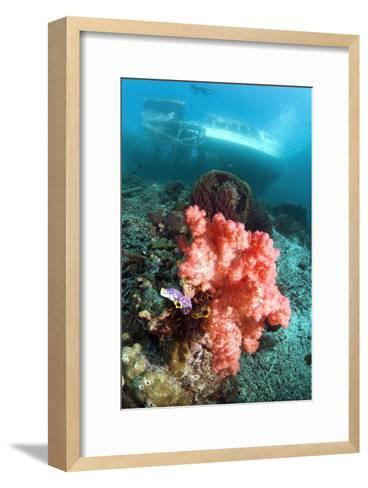 Soft Coral And Sea Squirts-Georgette Douwma-Framed Art Print