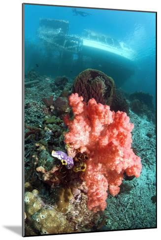 Soft Coral And Sea Squirts-Georgette Douwma-Mounted Photographic Print