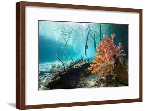 Corals In a Mangrove Swamp-Georgette Douwma-Framed Art Print