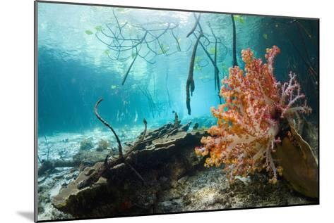 Corals In a Mangrove Swamp-Georgette Douwma-Mounted Photographic Print