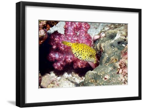 Yellow Boxfish-Georgette Douwma-Framed Art Print