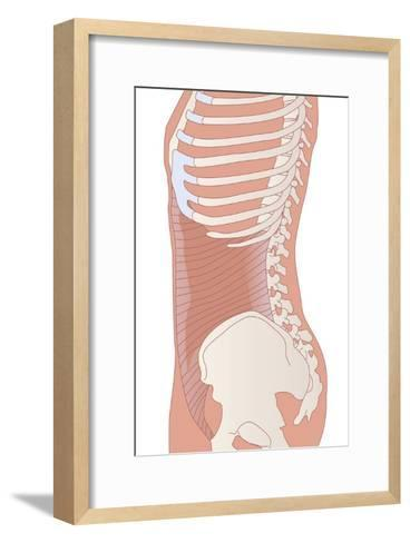Transversus Abdominis Muscle, Artwork-Peter Gardiner-Framed Art Print