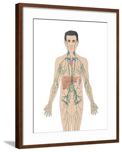Lymphatic System, Artwork-Peter Gardiner-Framed Art Print