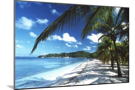 Beach with Palm Trees-Peter Falkner-Mounted Photographic Print