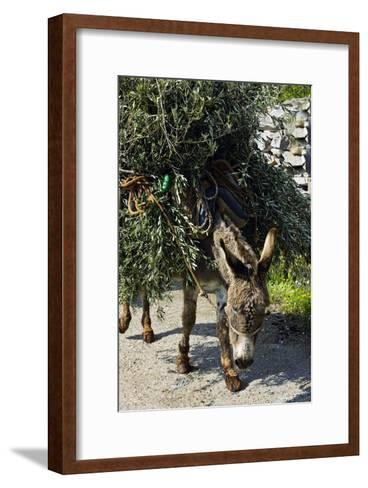 Donkey Carrying Olive Branches-Bob Gibbons-Framed Art Print