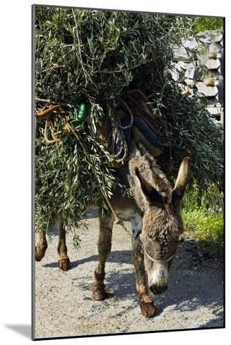 Donkey Carrying Olive Branches-Bob Gibbons-Mounted Photographic Print