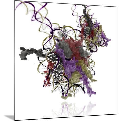 Nucleosome Molecule-Ramon Andrade-Mounted Photographic Print