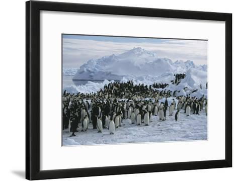 Emperor Penguins-Doug Allan-Framed Art Print
