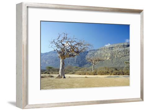 Myrrh Tree-Diccon Alexander-Framed Art Print
