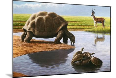 Giant Tortoise-Mauricio Anton-Mounted Photographic Print