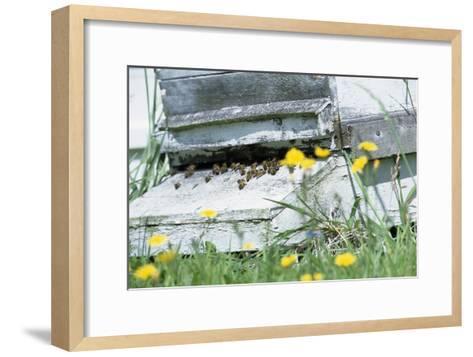 Bee Hive-David Aubrey-Framed Art Print