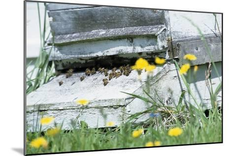 Bee Hive-David Aubrey-Mounted Photographic Print