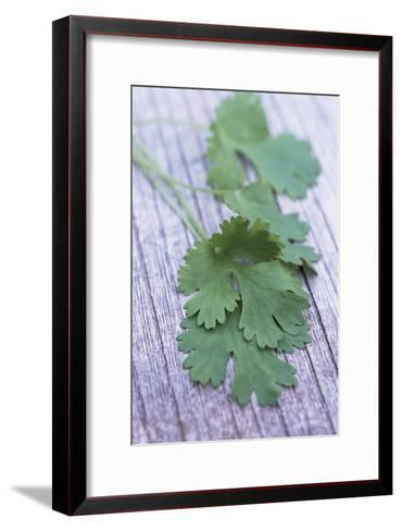 Coriander Leaves-Maxine Adcock-Framed Art Print