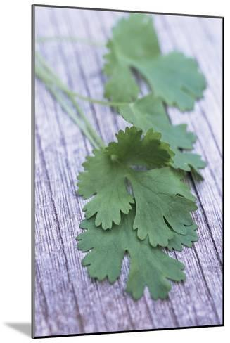 Coriander Leaves-Maxine Adcock-Mounted Photographic Print